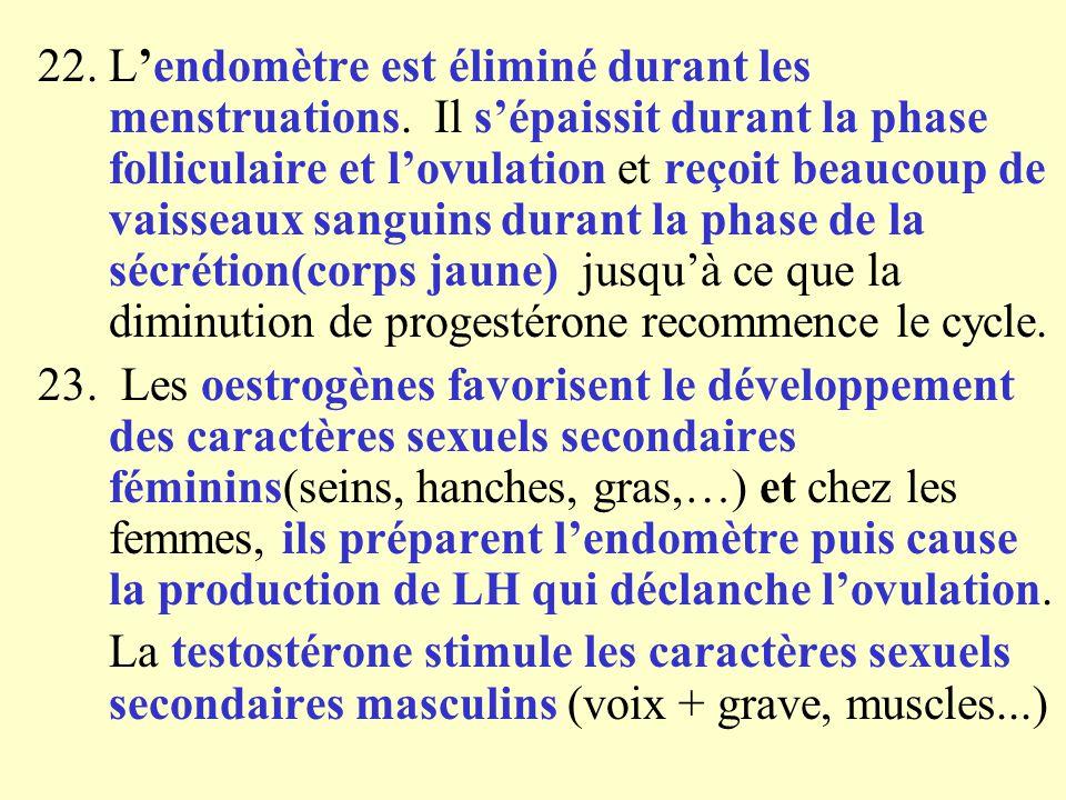 22. L'endomètre est éliminé durant les menstruations