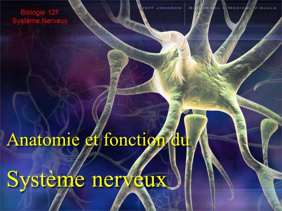 Biologie 12F Système Nerveux Anatomie et fonction du Système nerveux