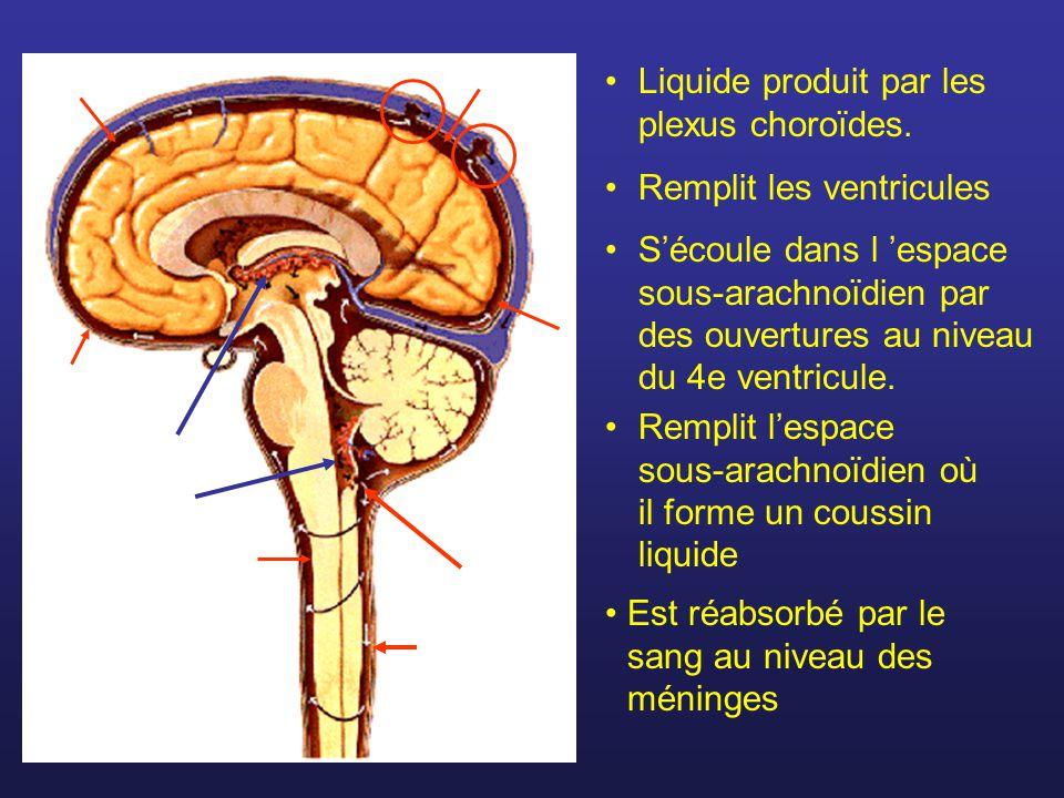 Liquide produit par les plexus choroïdes.