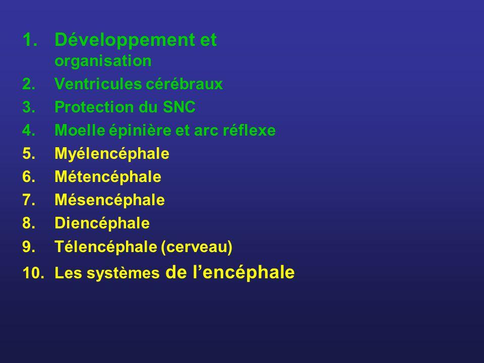 Développement et organisation