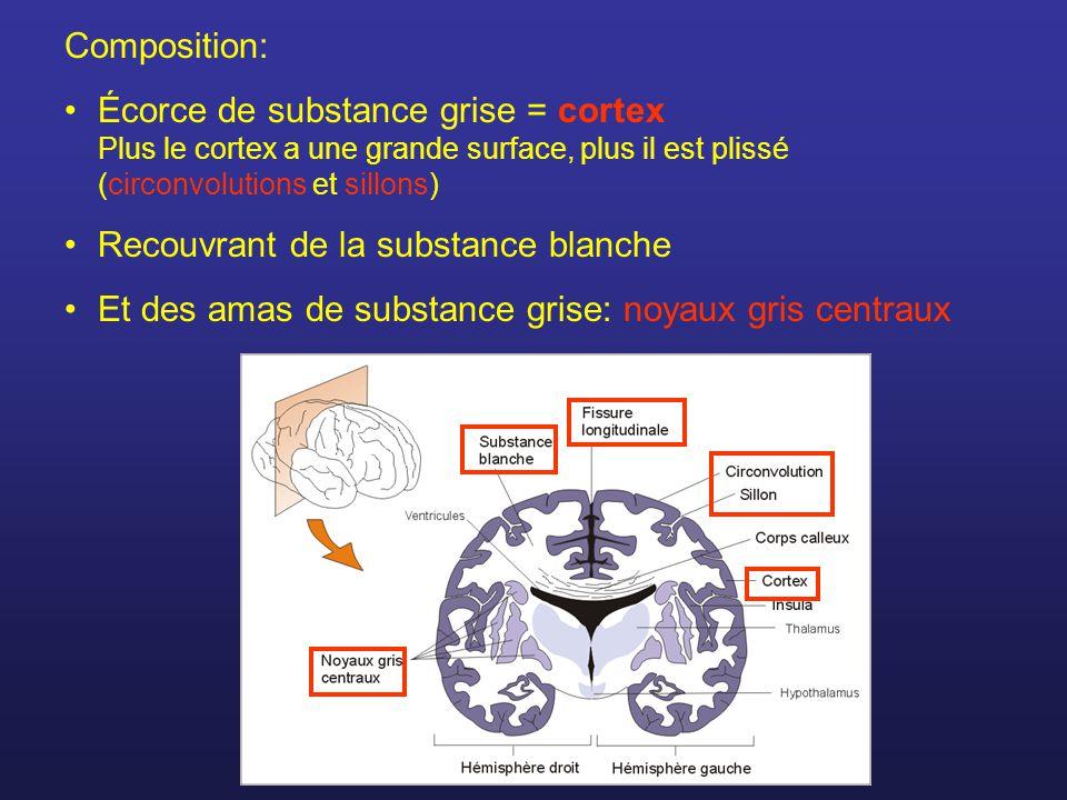 Composition: Écorce de substance grise = cortex Plus le cortex a une grande surface, plus il est plissé (circonvolutions et sillons)