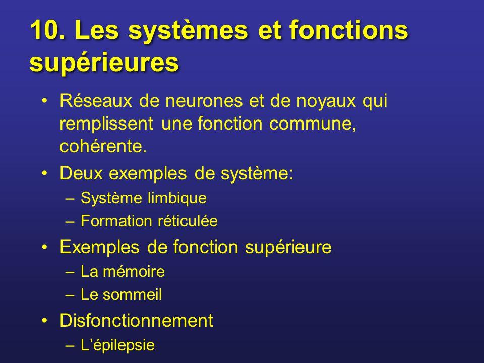 10. Les systèmes et fonctions supérieures