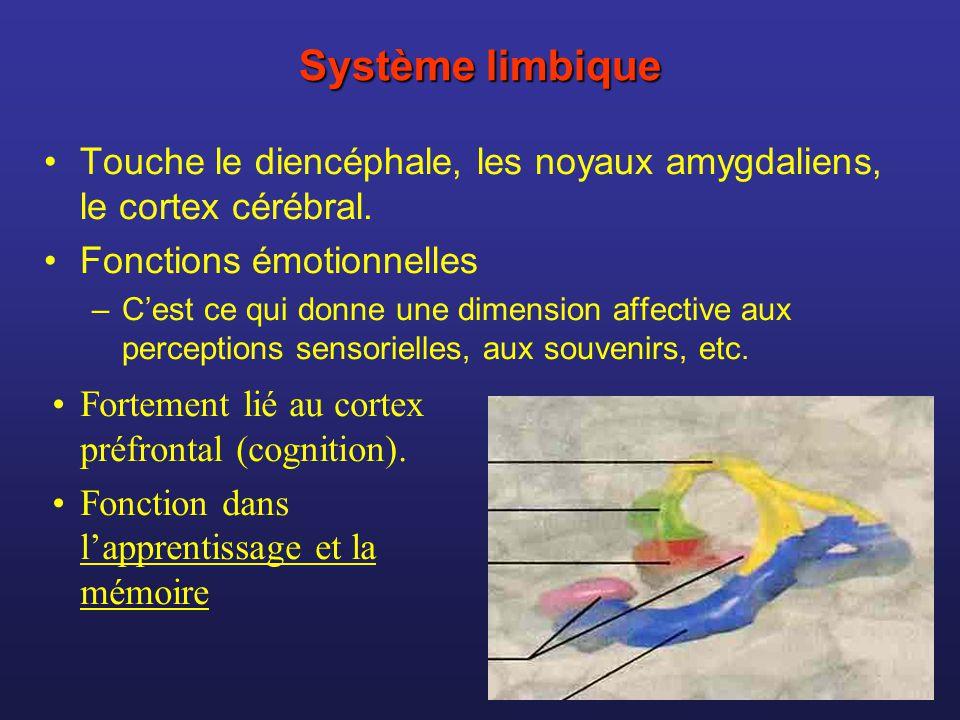 Système limbique Touche le diencéphale, les noyaux amygdaliens, le cortex cérébral. Fonctions émotionnelles.