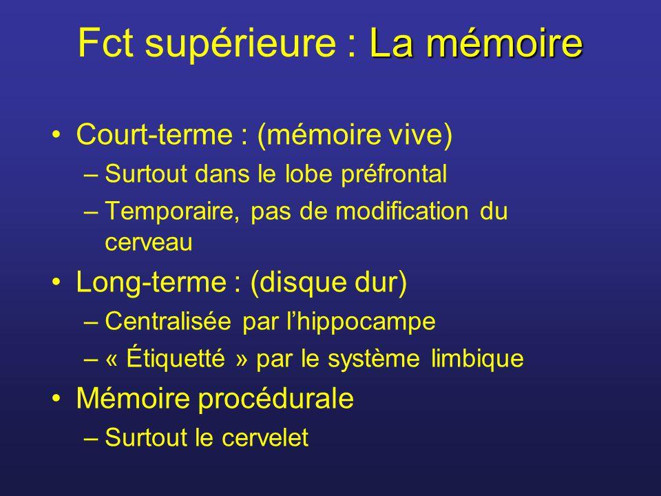 Fct supérieure : La mémoire