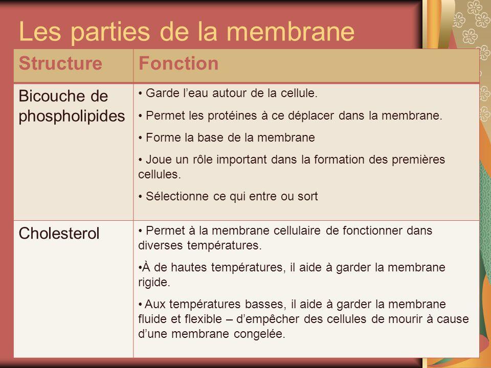 Les parties de la membrane