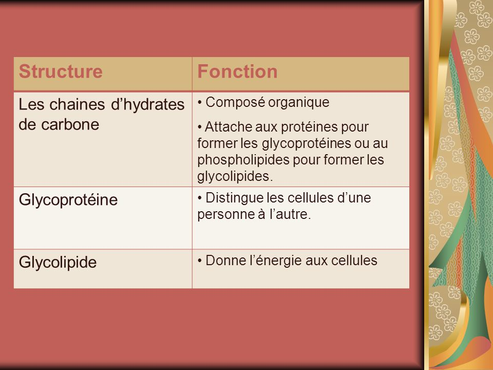 Structure Fonction Les chaines d'hydrates de carbone Glycoprotéine