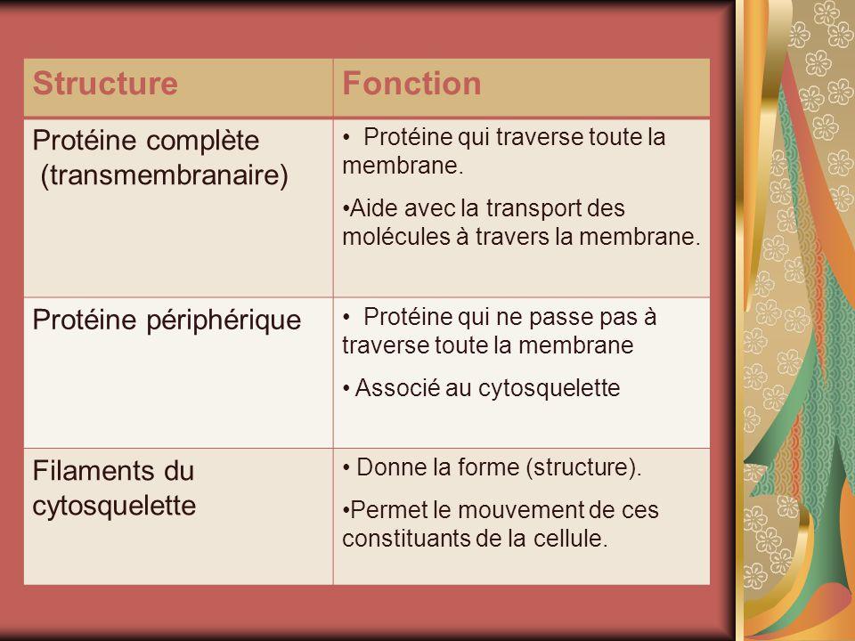 Structure Fonction Protéine complète (transmembranaire)