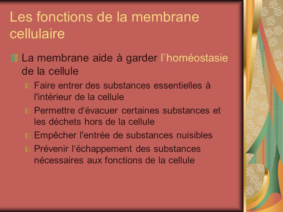 Les fonctions de la membrane cellulaire