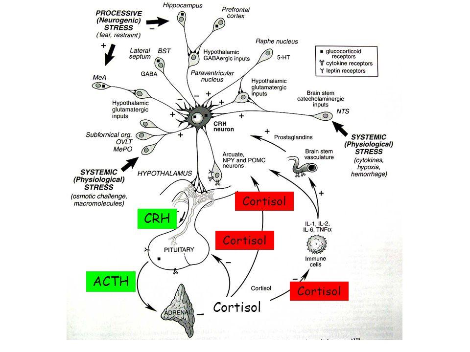 Cortisol CRH Cortisol ACTH Cortisol Cortisol