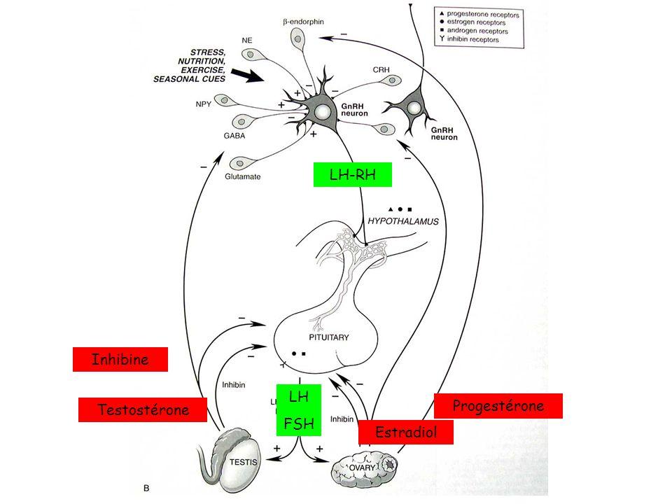 LH-RH Inhibine LH FSH Testostérone Progestérone Estradiol
