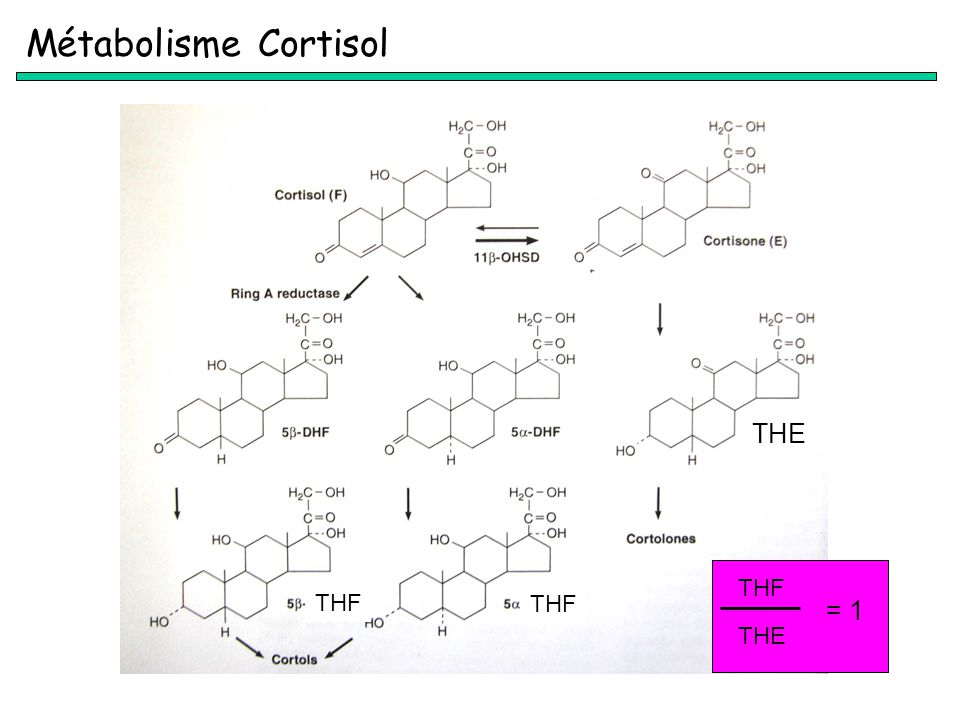 Métabolisme Cortisol THE THF THE = 1 THF THF