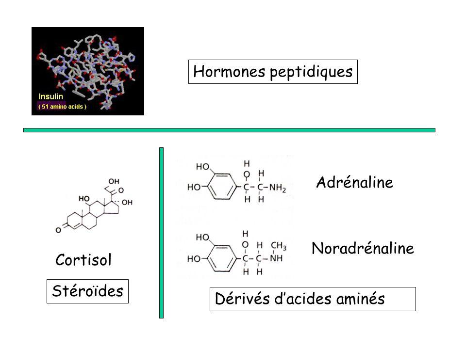 Hormones peptidiques Adrénaline Noradrénaline Cortisol Stéroïdes Dérivés d'acides aminés