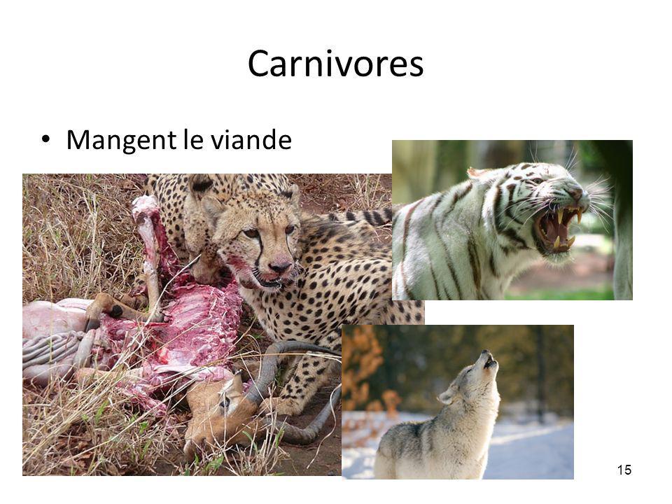 Carnivores Mangent le viande 15