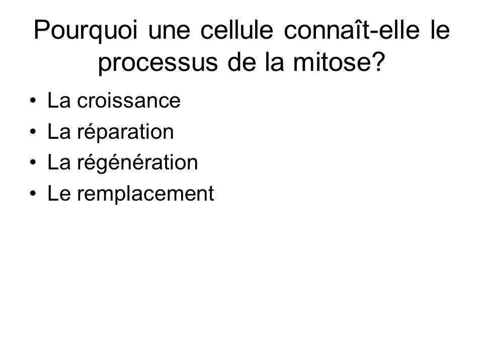 Pourquoi une cellule connaît-elle le processus de la mitose