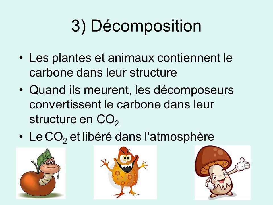 3) Décomposition Les plantes et animaux contiennent le carbone dans leur structure.
