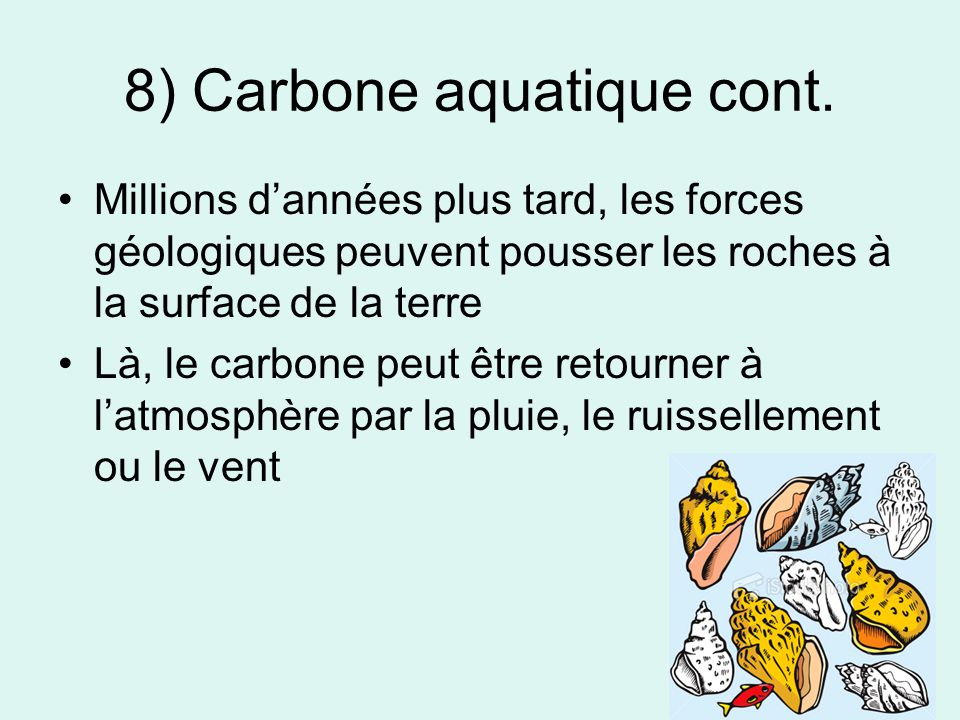 8) Carbone aquatique cont.