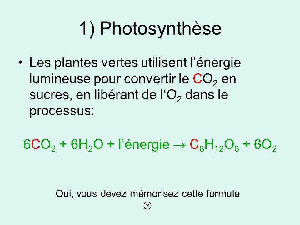 1) Photosynthèse Les plantes vertes utilisent l'énergie lumineuse pour convertir le CO2 en sucres, en libérant de l'O2 dans le processus: