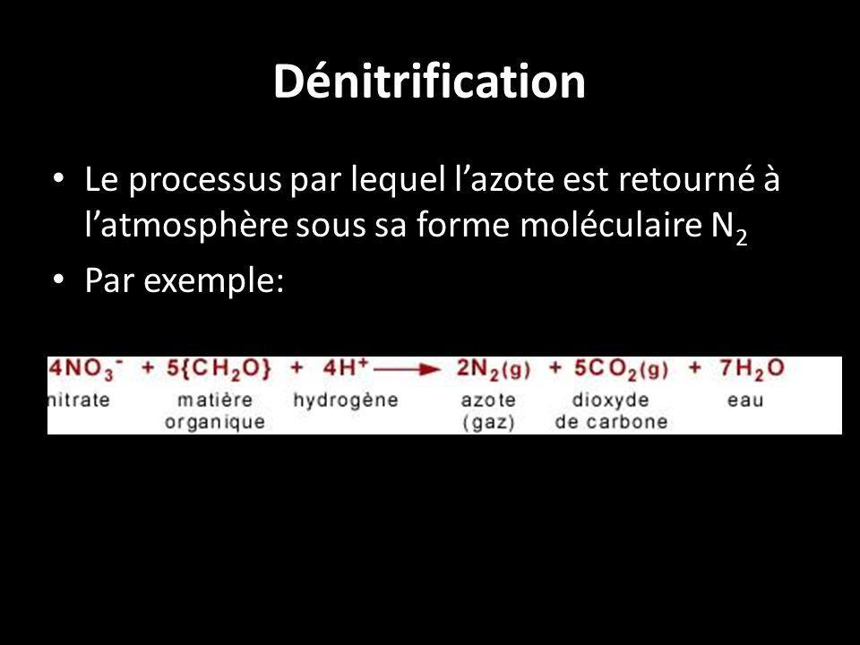 Dénitrification Le processus par lequel l'azote est retourné à l'atmosphère sous sa forme moléculaire N2.