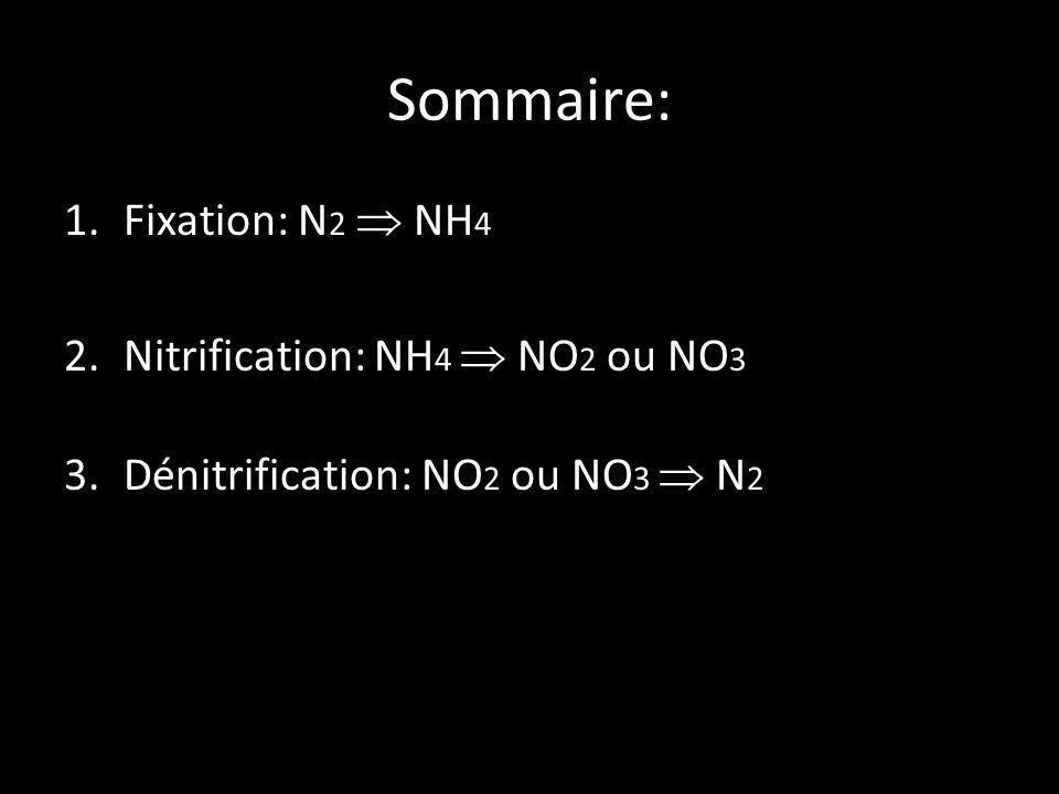 Sommaire: Fixation: N2  NH4 Nitrification: NH4  NO2 ou NO3