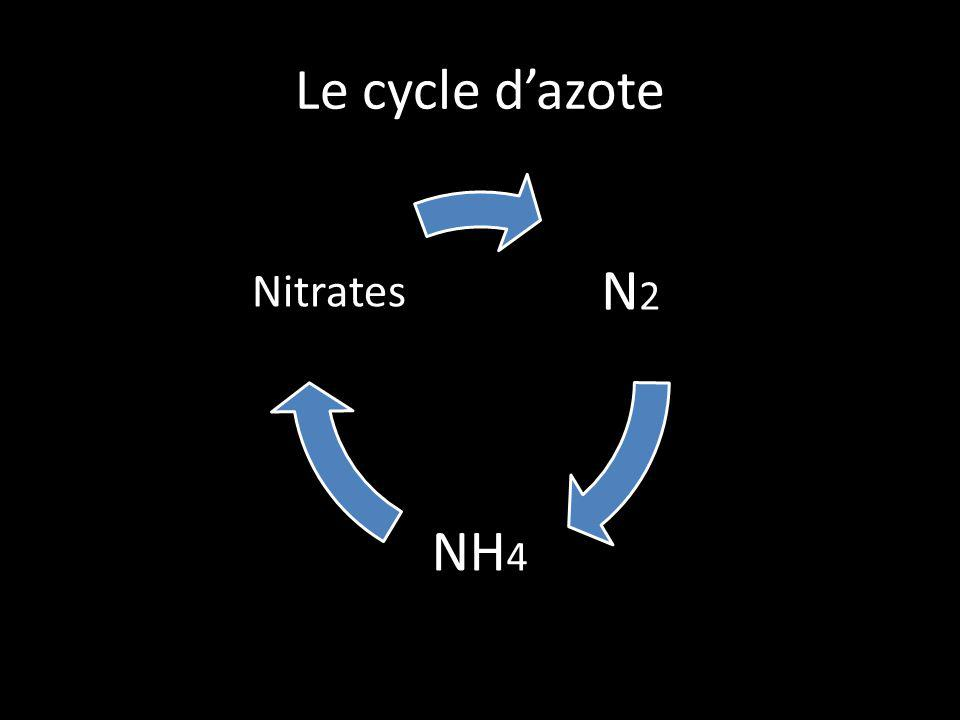 Le cycle d'azote N2 NH4 Nitrates