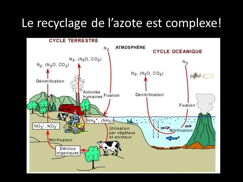 Le recyclage de l'azote est complexe!