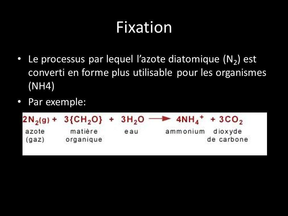 Fixation Le processus par lequel l'azote diatomique (N2) est converti en forme plus utilisable pour les organismes (NH4)