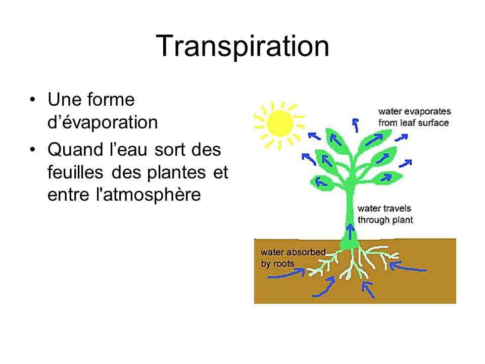 Transpiration Une forme d'évaporation