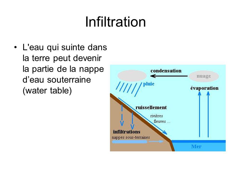 Infiltration L eau qui suinte dans la terre peut devenir la partie de la nappe d'eau souterraine (water table)