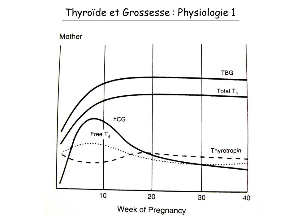 Thyroïde et Grossesse : Physiologie 1