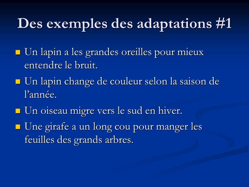 Des exemples des adaptations #1