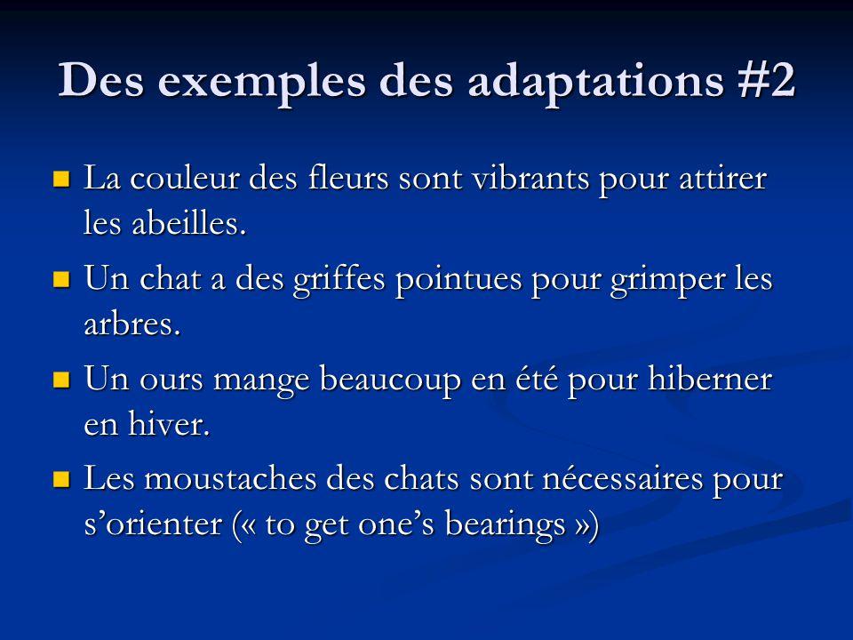 Des exemples des adaptations #2