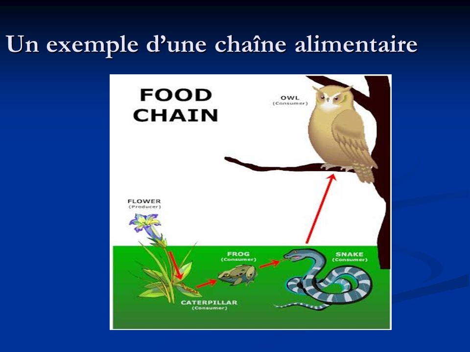 Un exemple d'une chaîne alimentaire