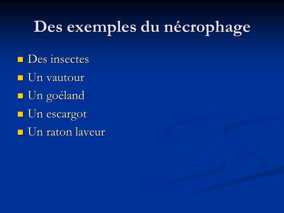 Des exemples du nécrophage