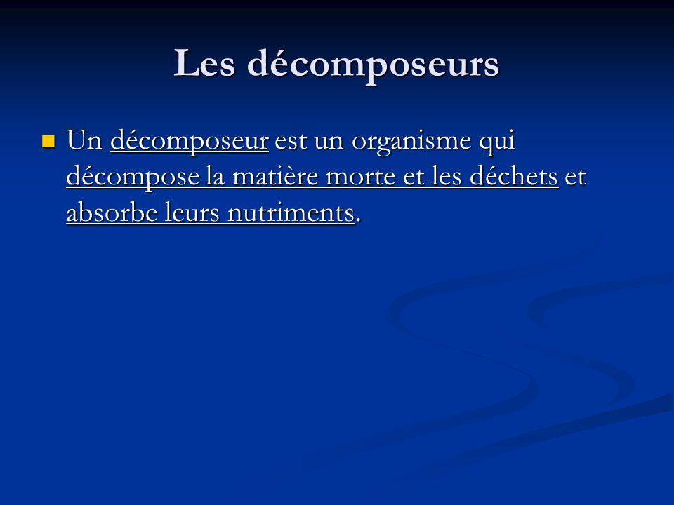 Les décomposeurs Un décomposeur est un organisme qui décompose la matière morte et les déchets et absorbe leurs nutriments.
