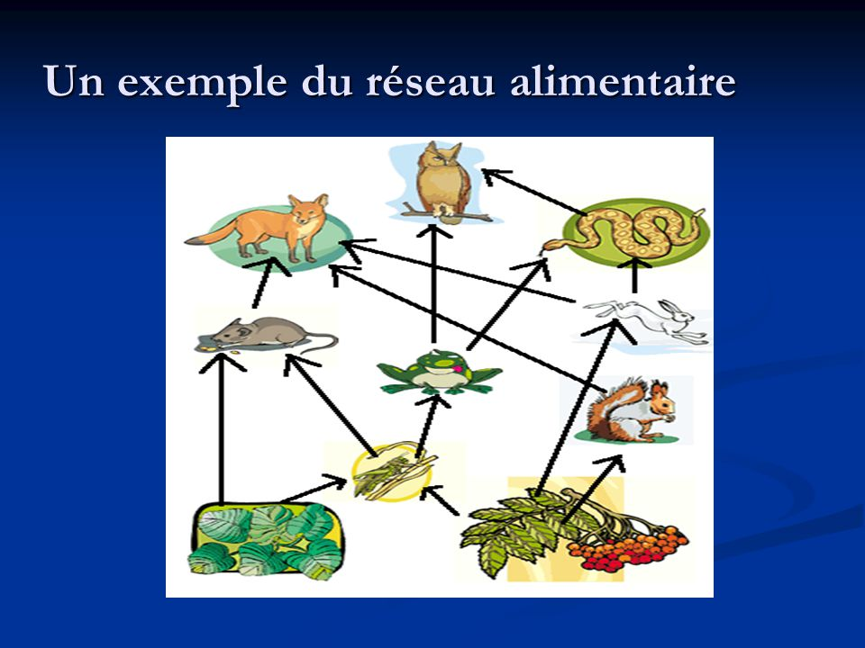 Un exemple du réseau alimentaire