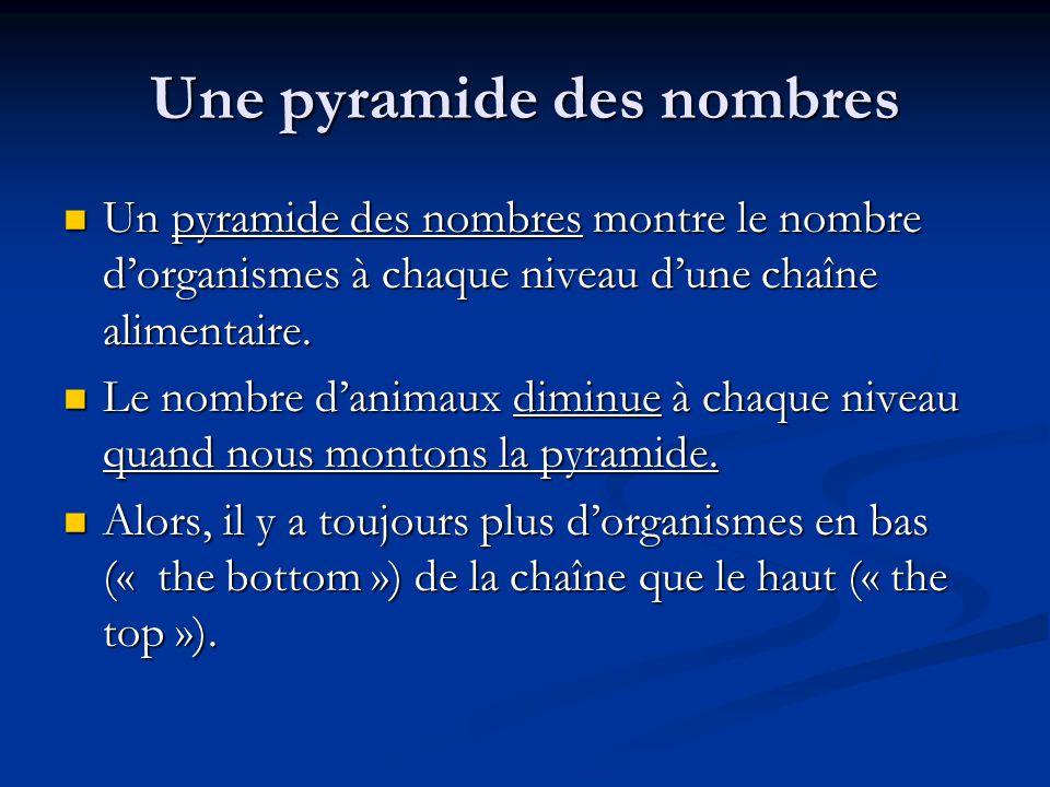 Une pyramide des nombres