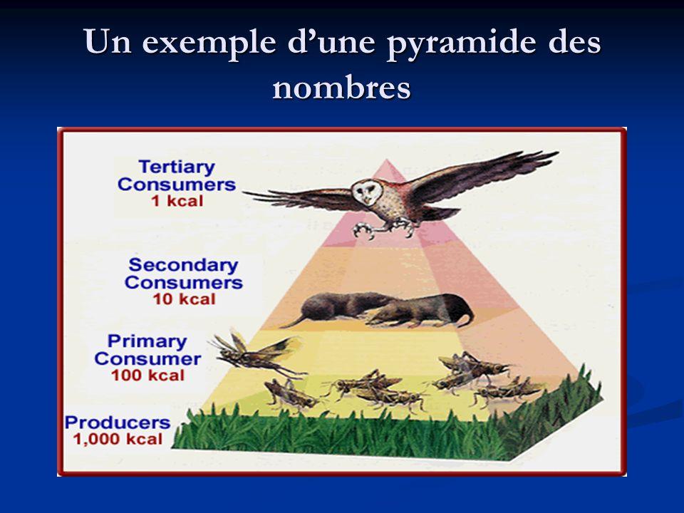 Un exemple d'une pyramide des nombres