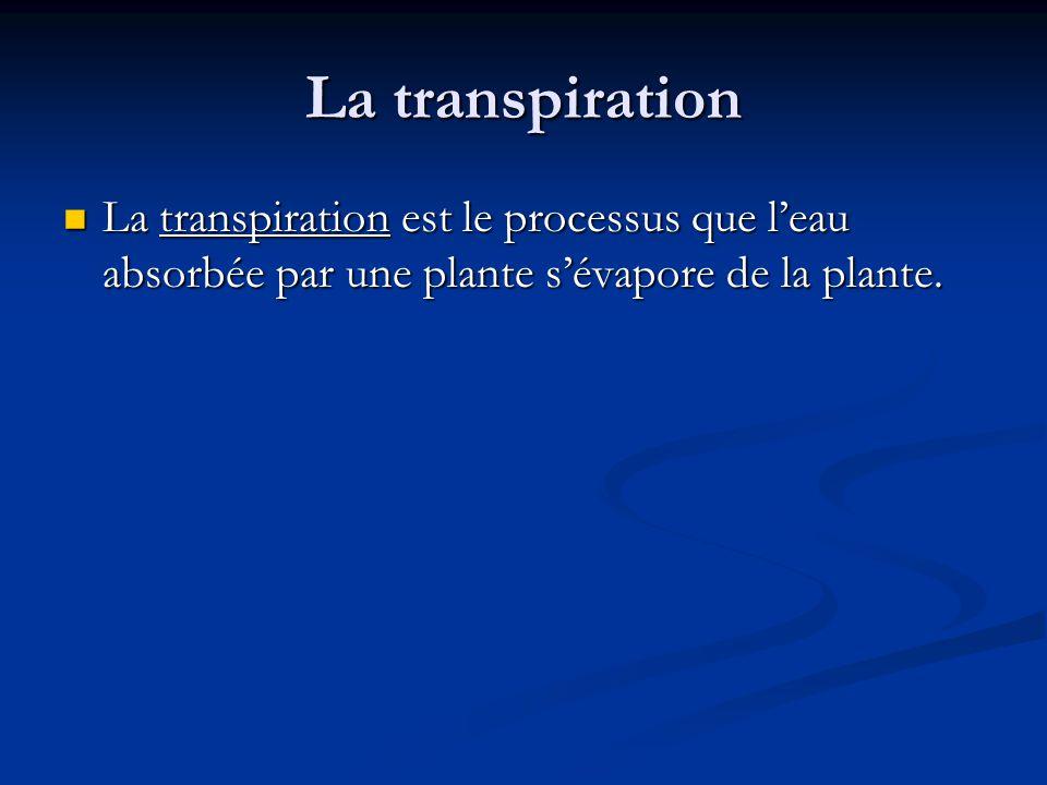 La transpiration La transpiration est le processus que l'eau absorbée par une plante s'évapore de la plante.