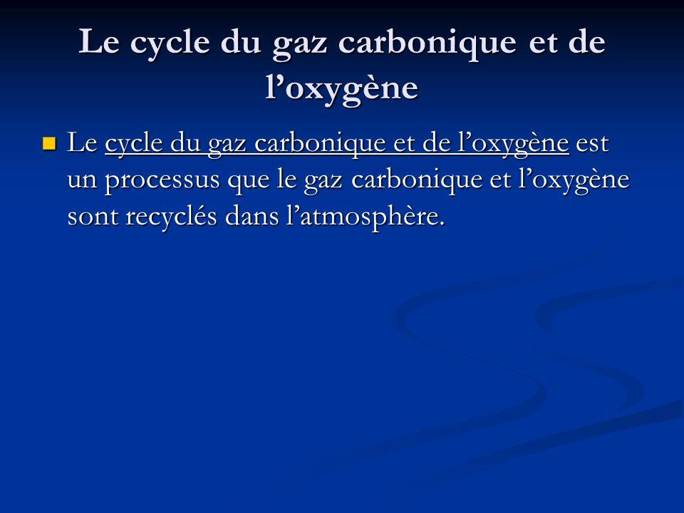 Le cycle du gaz carbonique et de l'oxygène