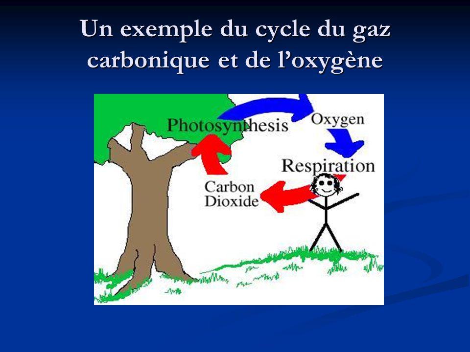 Un exemple du cycle du gaz carbonique et de l'oxygène