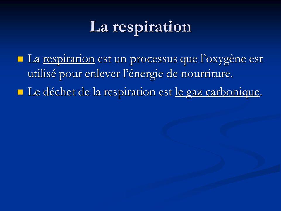 La respiration La respiration est un processus que l'oxygène est utilisé pour enlever l'énergie de nourriture.