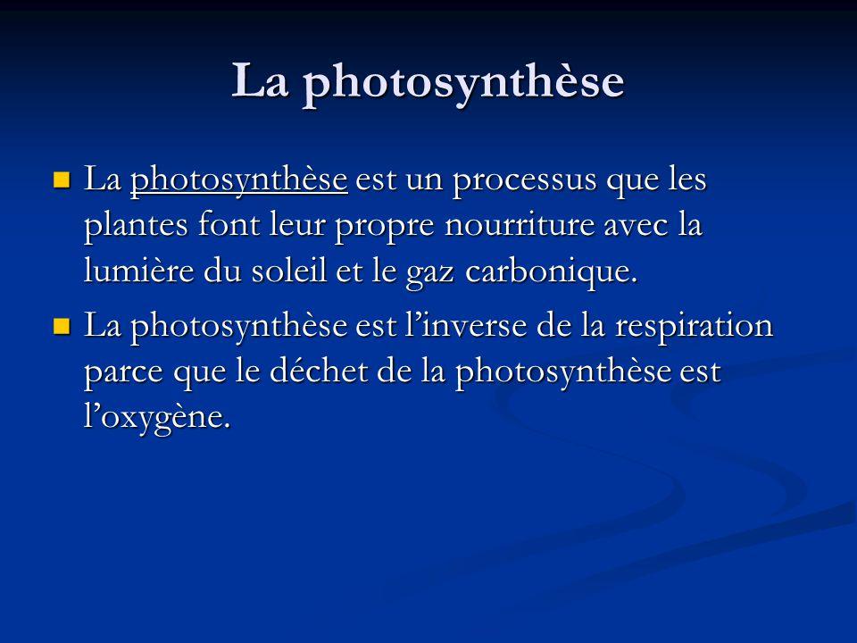 La photosynthèse La photosynthèse est un processus que les plantes font leur propre nourriture avec la lumière du soleil et le gaz carbonique.