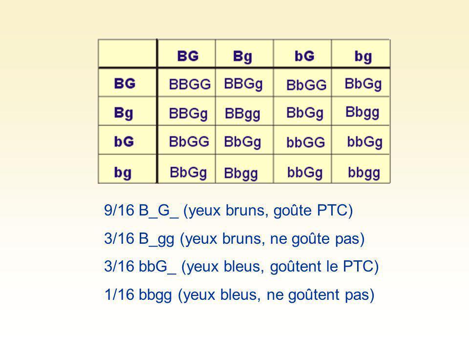 9/16 B_G_ (yeux bruns, goûte PTC)