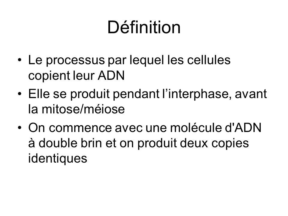 Définition Le processus par lequel les cellules copient leur ADN