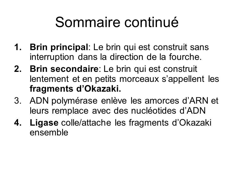 Sommaire continué Brin principal: Le brin qui est construit sans interruption dans la direction de la fourche.