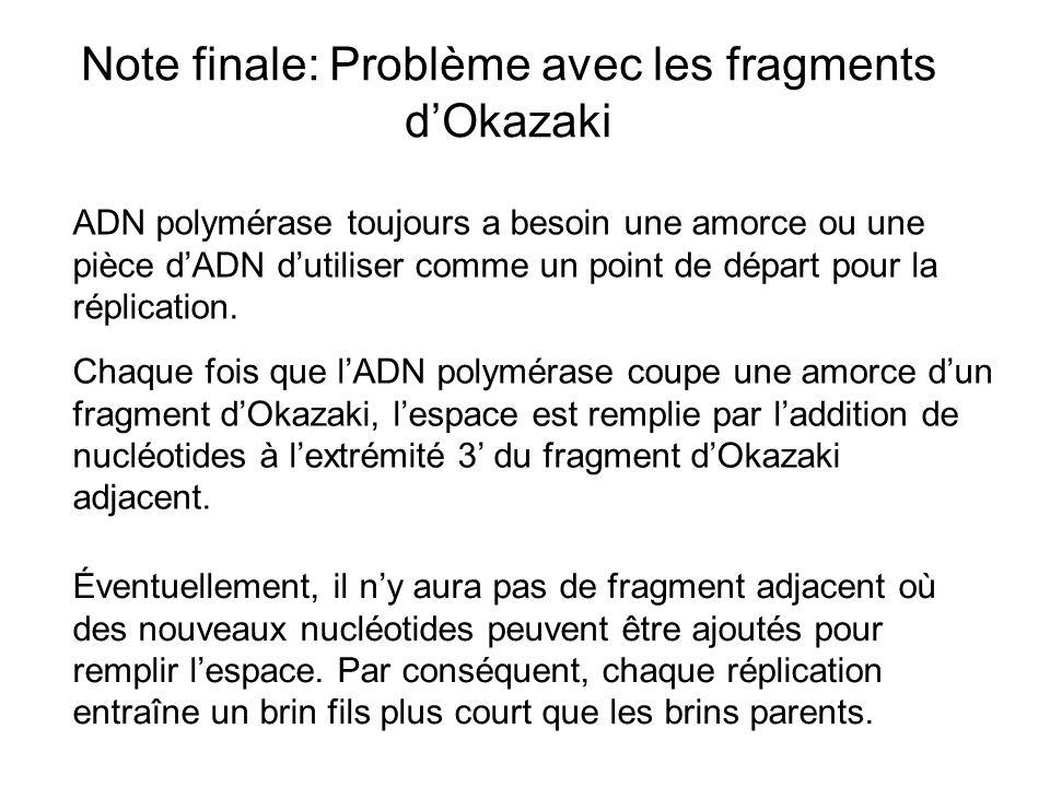 Note finale: Problème avec les fragments d'Okazaki