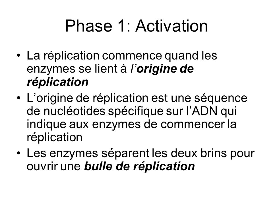 Phase 1: Activation La réplication commence quand les enzymes se lient à l'origine de réplication.