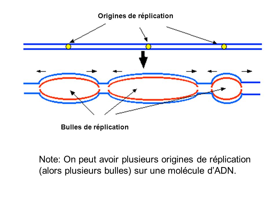 Origines de réplication