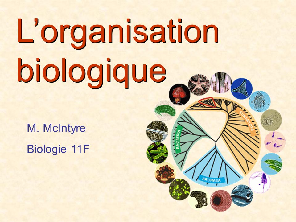 L'organisation biologique