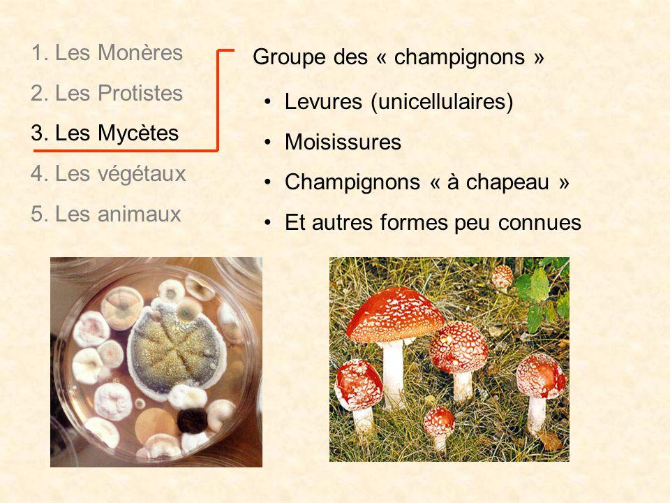 1. Les Monères 2. Les Protistes. 3. Les Mycètes. 4. Les végétaux. 5. Les animaux. Groupe des « champignons »